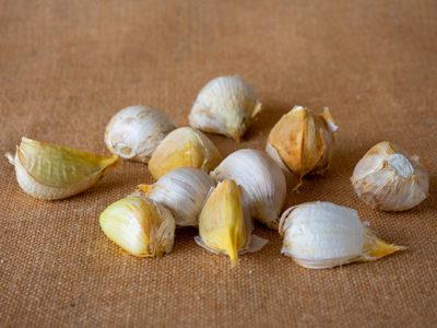 buy fresh garlic