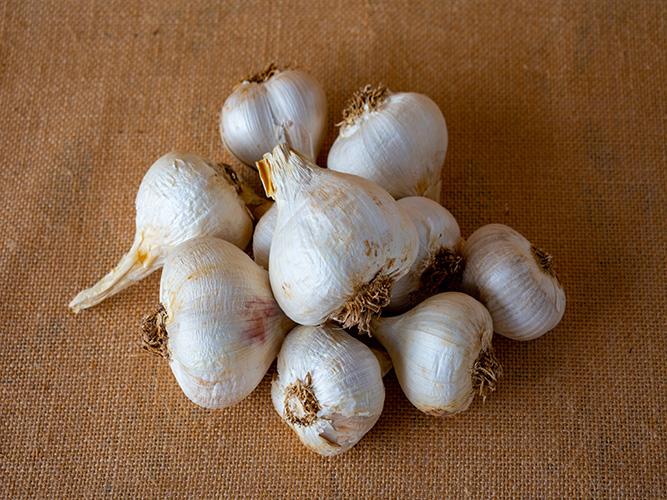 buy fresh garlic from Byron Bay